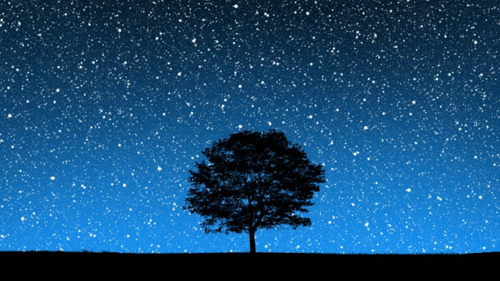 Tree, night, sky.